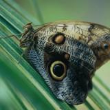 Papiliorama Chiètres